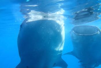 鯨鮫2.JPG