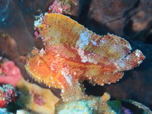 LeafFish.JPG