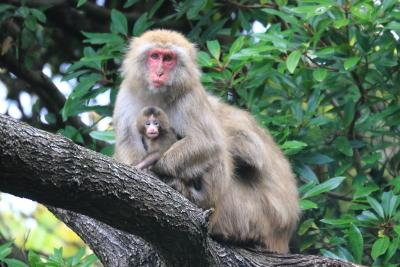 大堂お猿公園-1.JPG