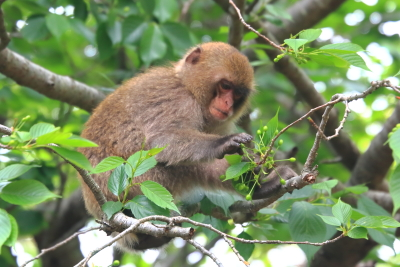 大堂お猿公園-2.JPG